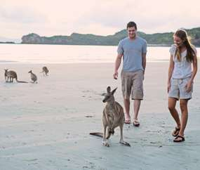 Mackay Cape Hillsborough national park