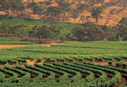 South Australia - Clare Valley