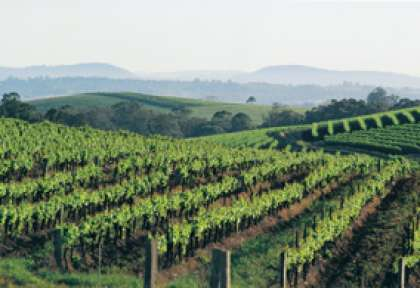 Les vignes de la Hunter Valley en Australie